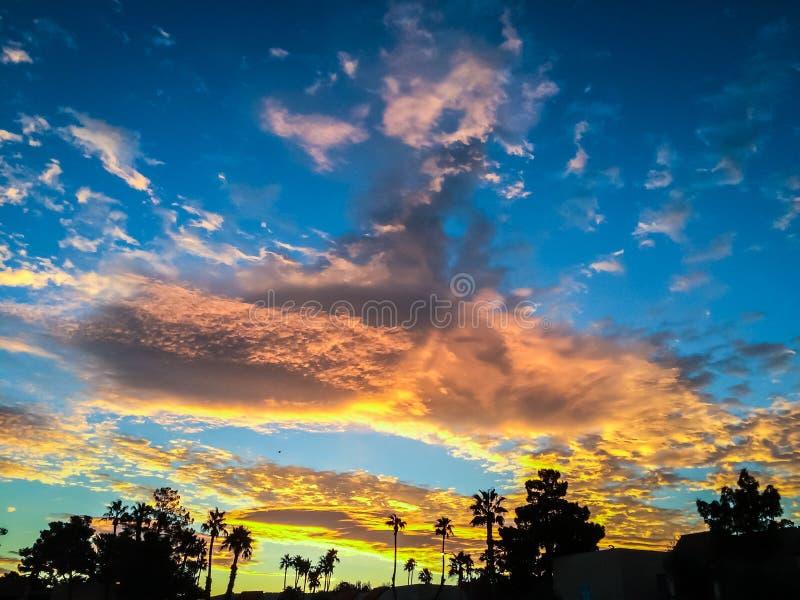 在棕榈树的金黄日出 库存照片