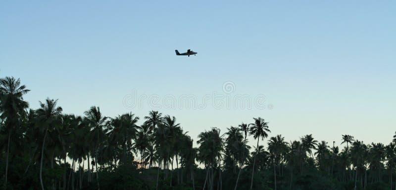 在棕榈树的飞机 库存照片