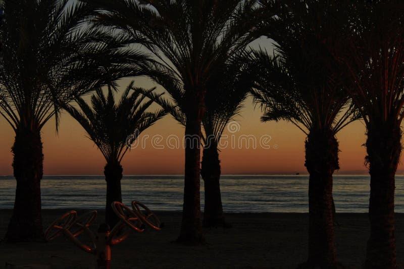 在棕榈树绿洲的日落在海滩的在南西班牙 免版税库存照片