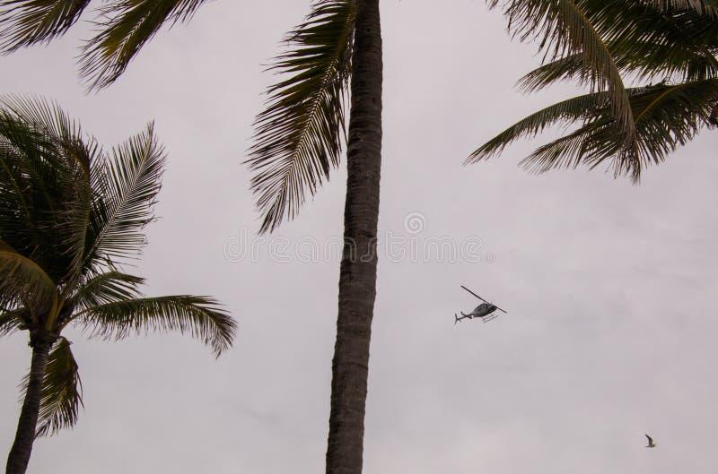 在棕榈树againt阴云密布天空之间的直升机 库存照片
