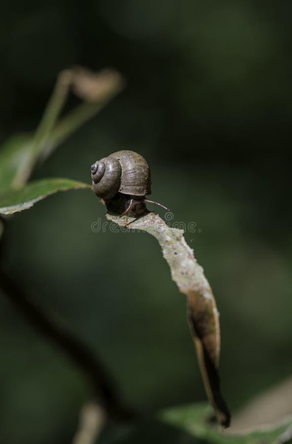 蜗牛包括有狮子对象,图片,特写,镜头,软体动物,黄色-996841石湖到空白林图片