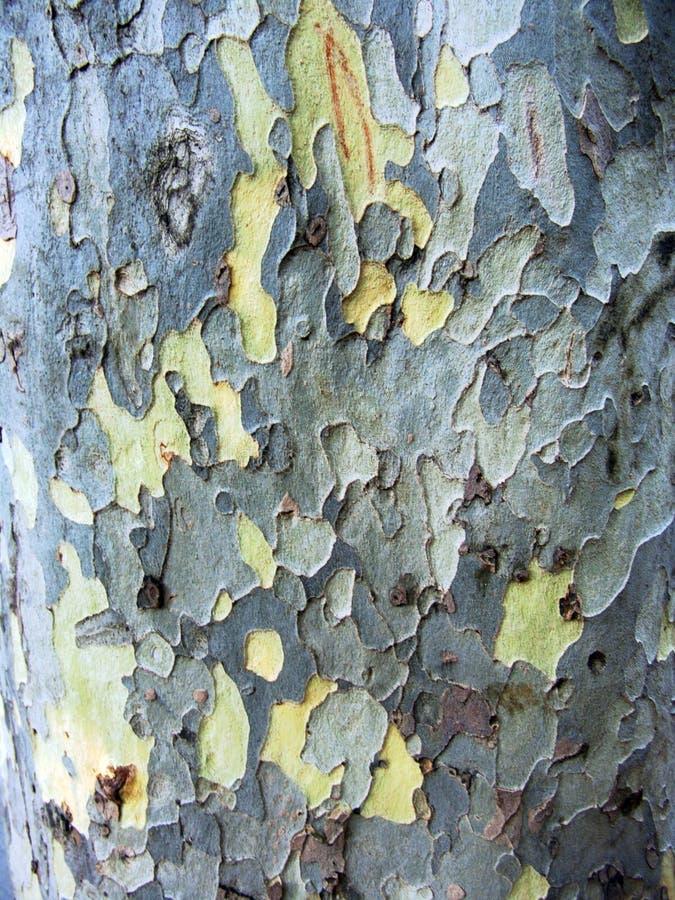 在棕色和白色的异常的木树皮 免版税图库摄影
