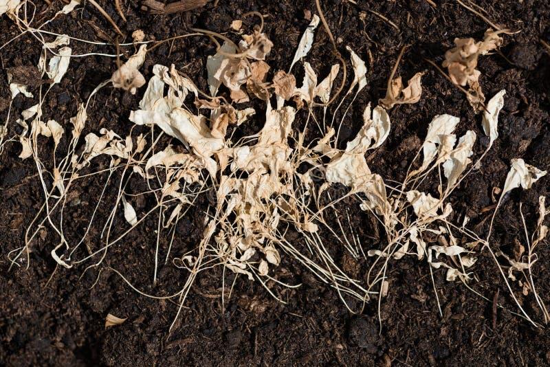 在棕色地面的干草 免版税库存图片