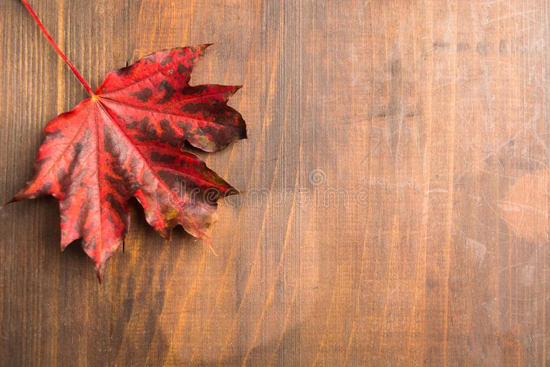 在棕色木背景的红色秋天枫叶 免版税库存照片