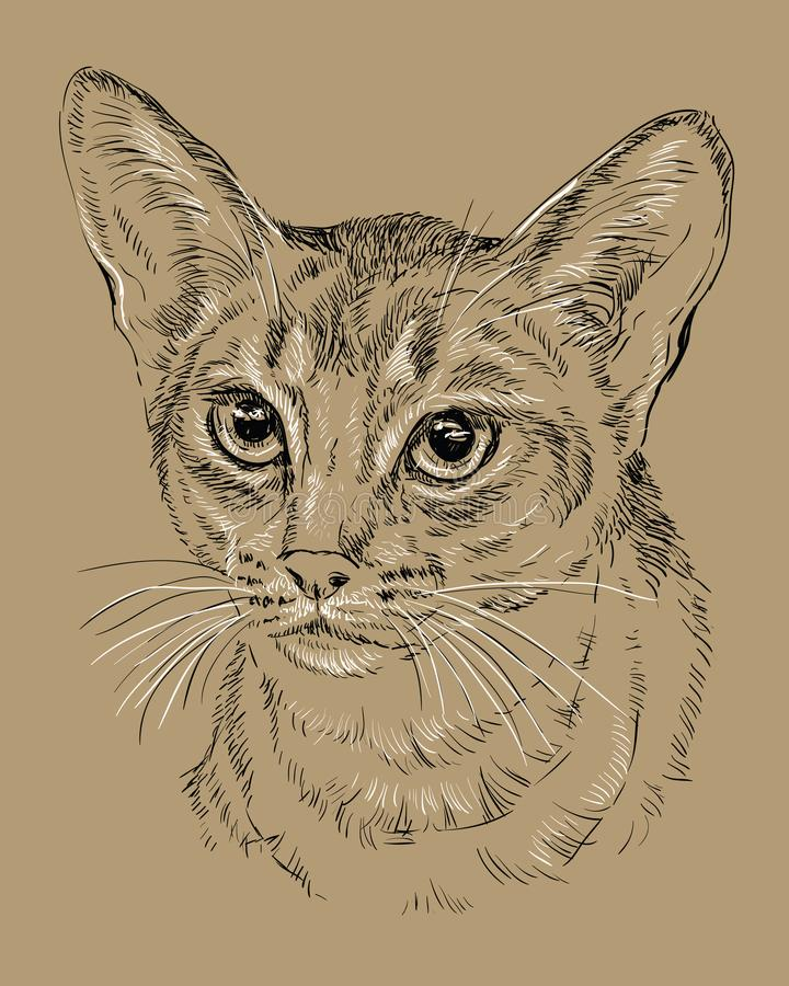 在棕色背景的埃塞俄比亚猫 库存例证