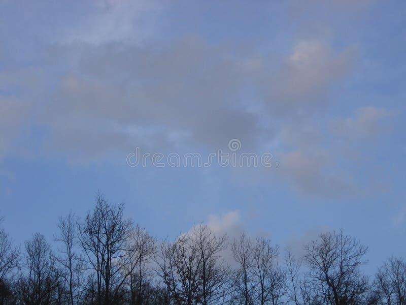 在森林上的天空 库存照片