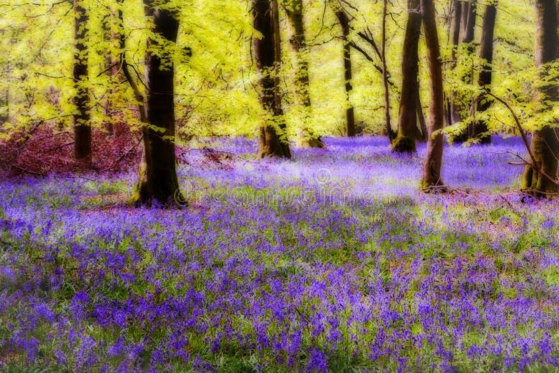 在森林中的会开蓝色钟形花的草 免版税库存照片