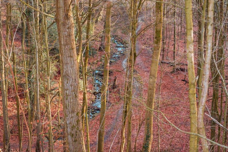在森林中间的河 免版税库存图片