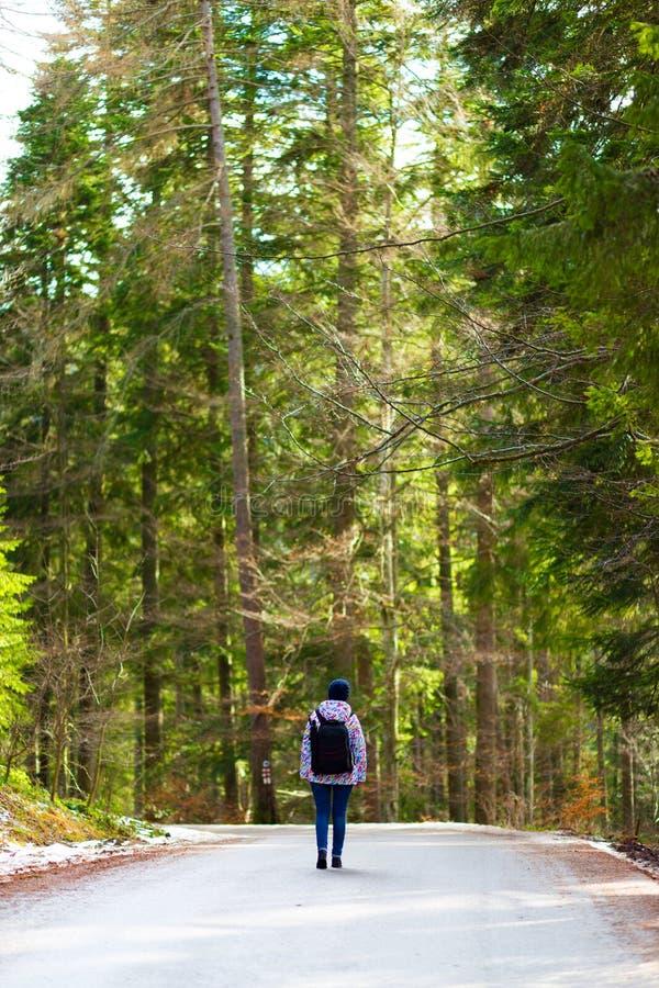 在森林中间的路 免版税库存图片