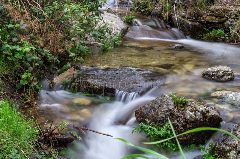 在森林之间的安静的小河 图库摄影