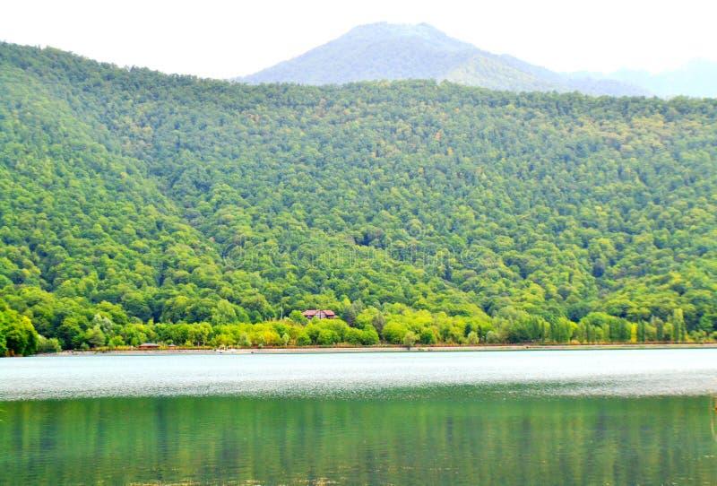 在森林之间的湖 免版税库存图片