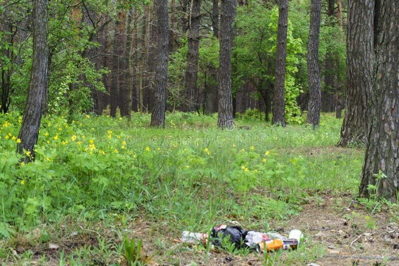 在森林人非法地被投掷的垃圾的垃圾到人和自然里的森林概念 非法垃圾堆本质上 ? 免版税图库摄影