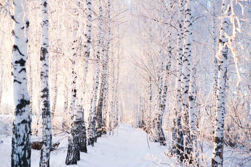 在森林冬天风景的积雪的树 库存照片