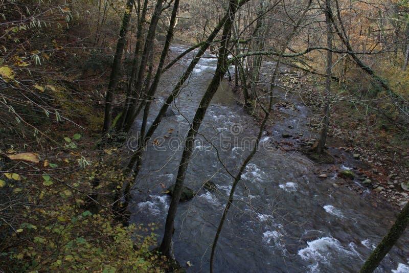 在森林和山里面的长尾巴河 图库摄影