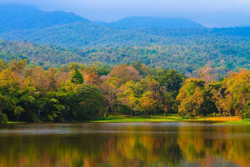 在森林和山附近的水库 图库摄影