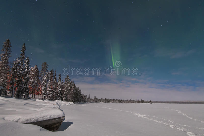 在森林和积雪的tre的美好的北极光 图库摄影