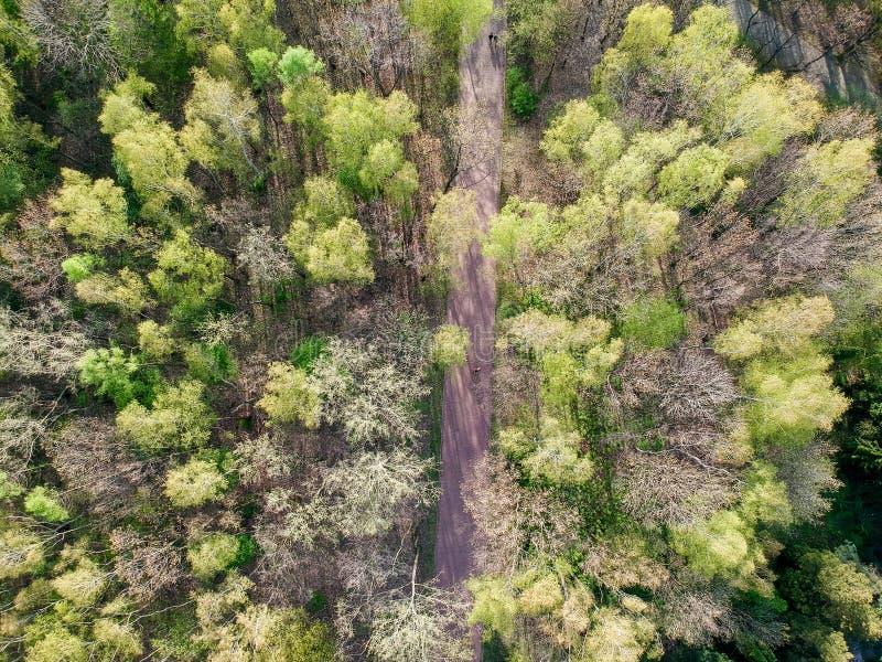 在森林地之间的狭窄的街道 库存图片