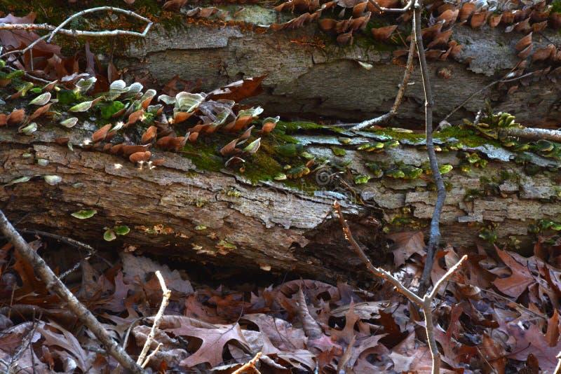 在森林地板上的真菌 图库摄影