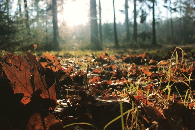 在森林地板上的秋叶 库存图片