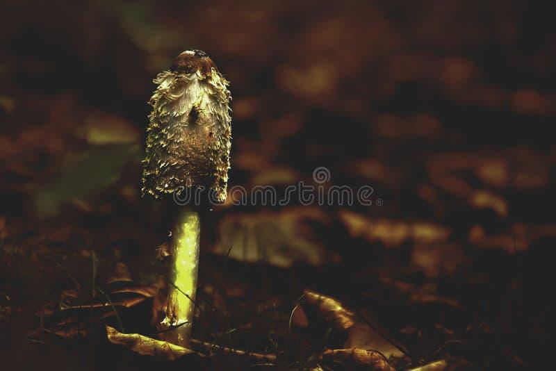 在森林地板上的蘑菇 库存图片