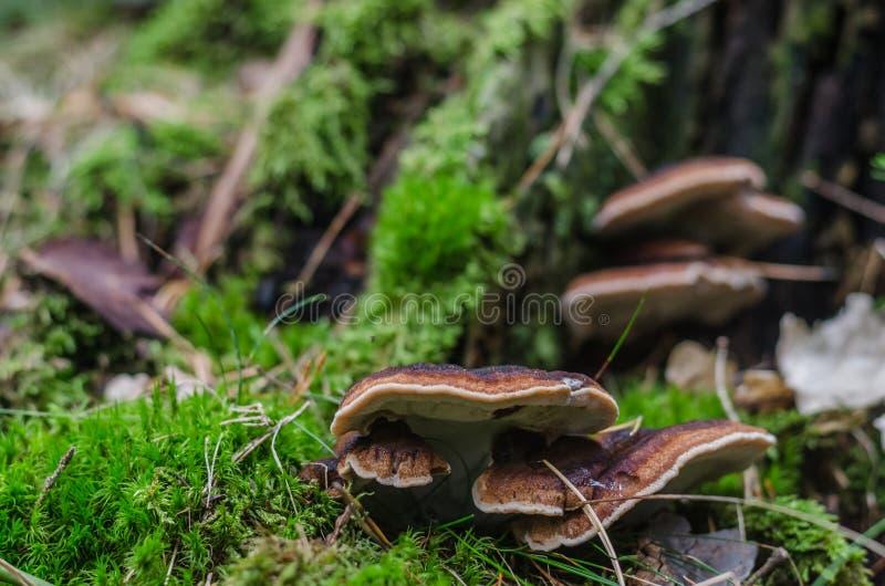 在森林地板的树海绵 免版税库存图片