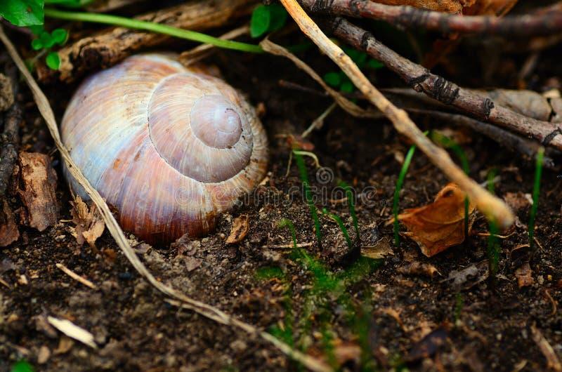 在森林地板的蜗牛在春天 免版税库存照片