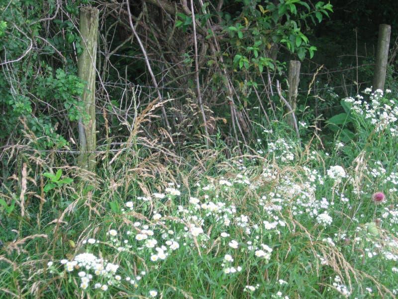 在森林地篱芭前面的野花 库存照片