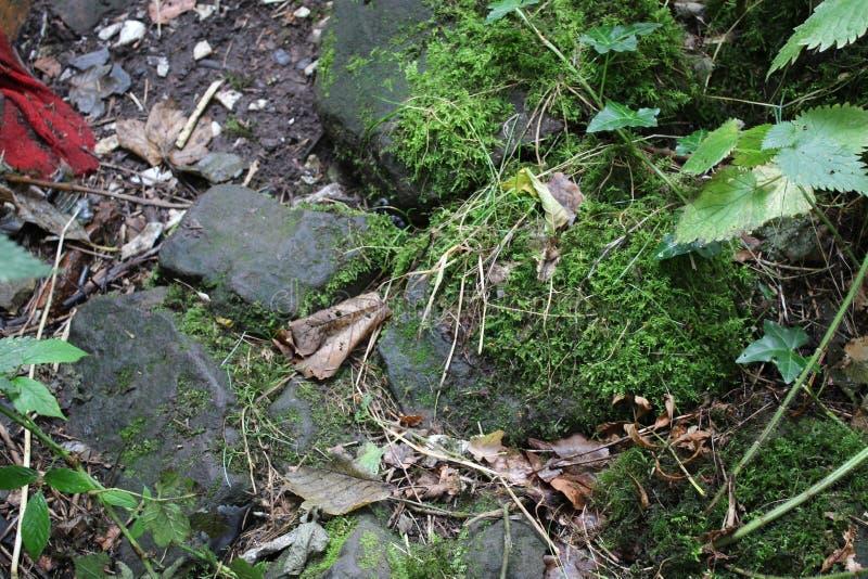 在森林地路的石头 库存照片
