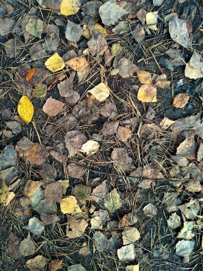 在森林地面的凋枯的灰色和黄色下落的秋叶 免版税库存照片