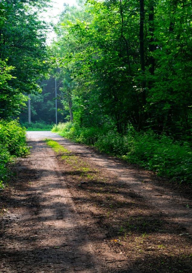 在森林外面的路 免版税图库摄影