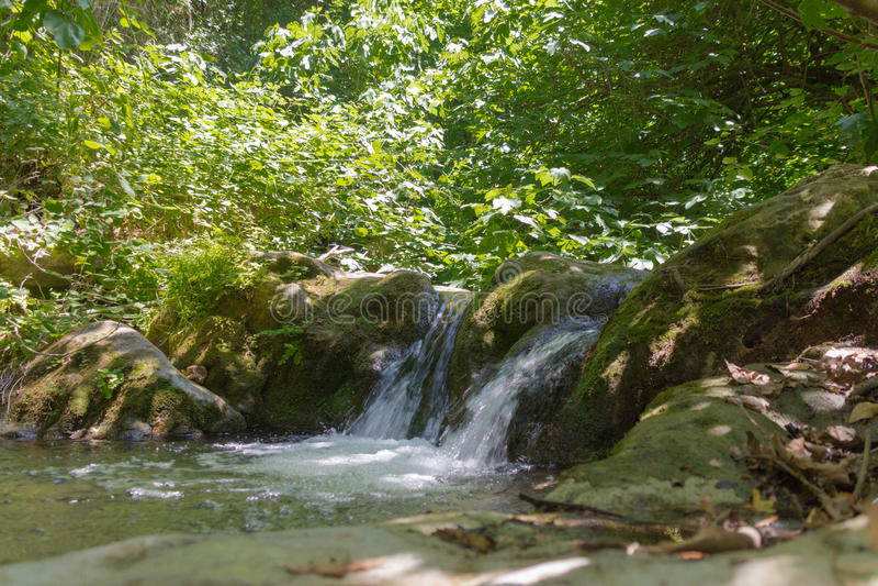 在森林小河的小瀑布 免版税库存图片