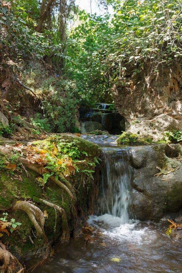 在森林小河阿穆德的小瀑布 图库摄影