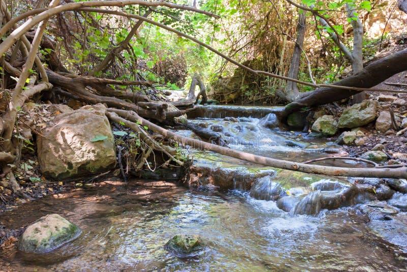 在森林小河阿穆德的小瀑布 库存照片