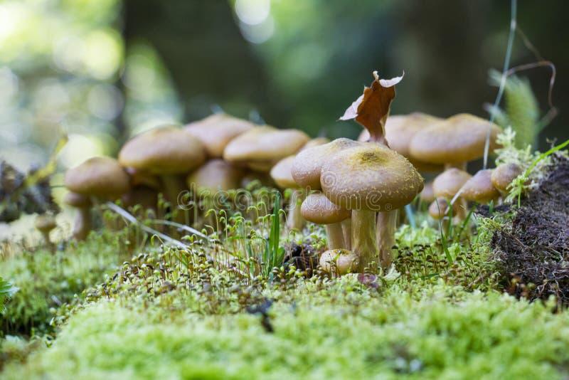 Download 在森林废弃物掩藏的蘑菇 库存照片. 图片 包括有 下来, 地衣, 下木, 废弃物, 不可食, 青苔, 宏指令 - 62531124