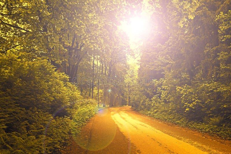 在森林森林视图的日落 ?? r 自然森林惊人视图的本质  后边看法 免版税库存图片