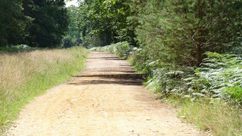 在森林步行的石渣道路 免版税库存图片