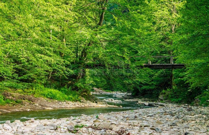 在森林河的桥梁 库存图片