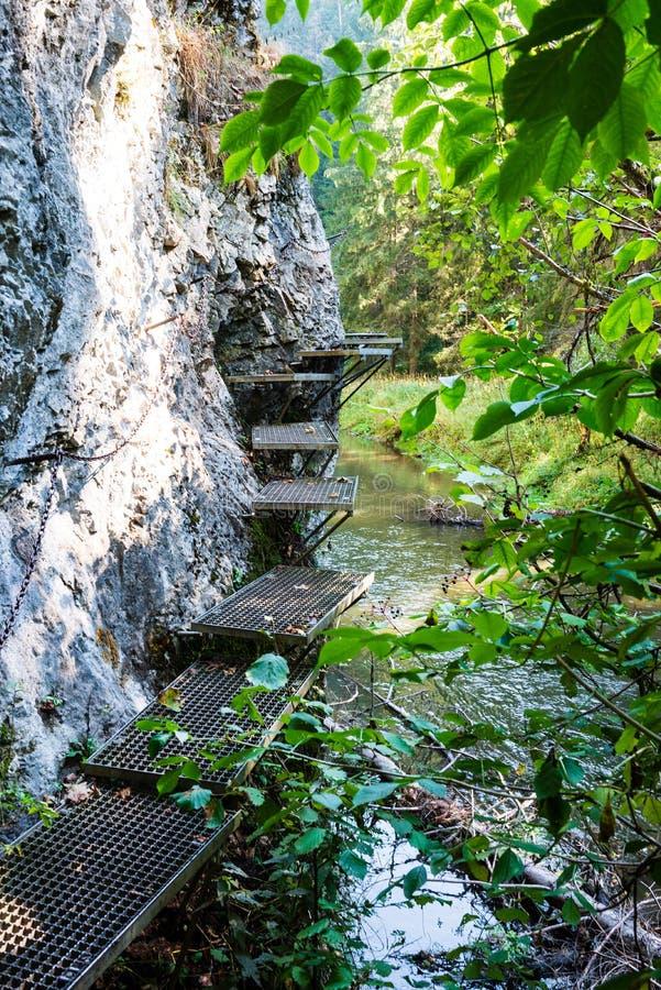 在森林河的脚桥梁在夏天 免版税库存图片