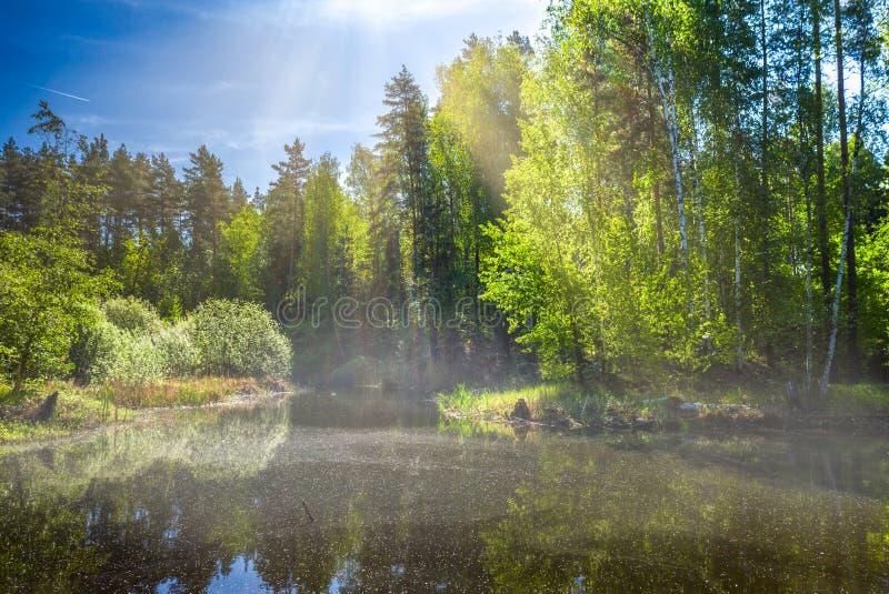 在森林湖的一个春天早晨,雾和阳光做一个壮观的风景 免版税图库摄影
