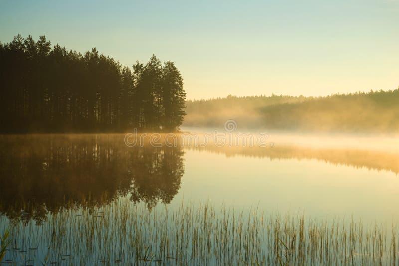 在森林湖的一个有雾的8月早晨 南芬兰 免版税库存图片