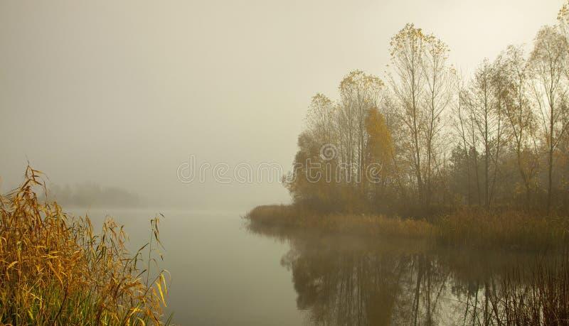 在森林湖的安静的有薄雾的清早 树在镇静水中反射了 免版税库存图片