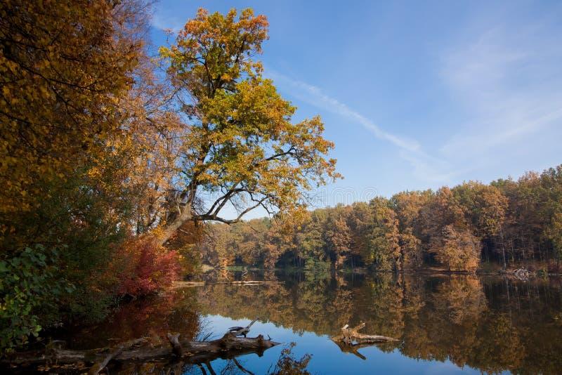 在森林湖的晴朗和冷的10月早晨,与树反射的清楚的天空蔚蓝在寂静的水表面 免版税库存图片