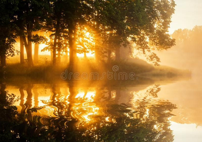 在森林湖的美好的有雾的春天黎明 免版税库存照片