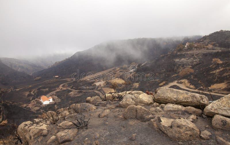 在森林火灾以后的大加那利岛 库存图片