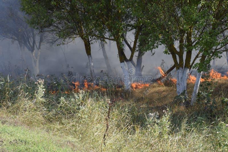 在森林火灾的火和烟在森林乱丢 草在森林森林火灾烧 免版税图库摄影
