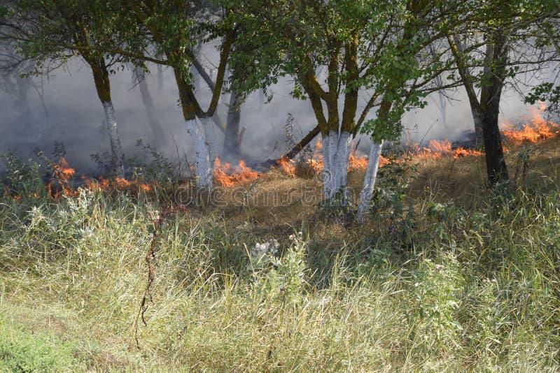 在森林火灾的火和烟在森林乱丢 草在森林森林火灾烧 库存照片