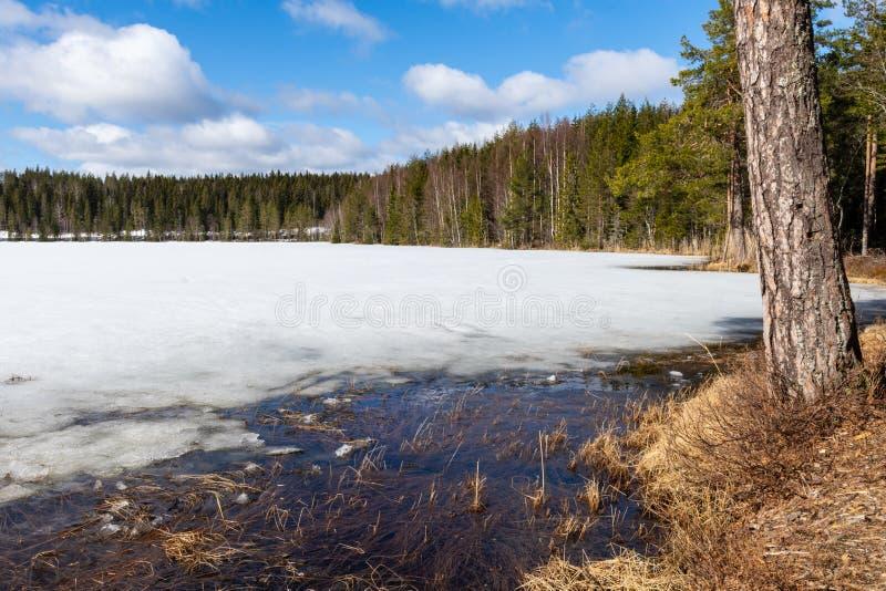 在森林环绕的湖中融融,背景蓝天 库存照片