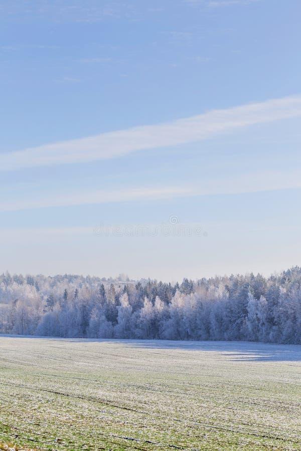 在森林白俄罗斯语风景的第一霜 期初冬天 库存图片