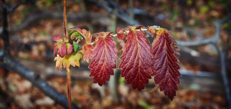 在森林的下落的秋叶 免版税库存照片