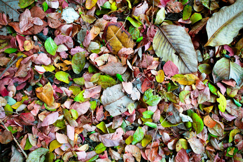 在森林的五颜六色的事假 免版税库存图片